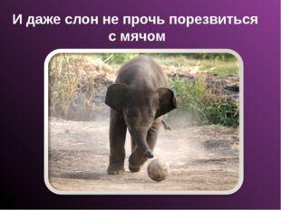И даже слон не прочь порезвиться с мячом
