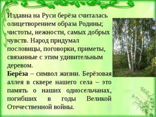 Издавна на Руси берёза считалась олицетворением образа Родины; чистоты, нежно