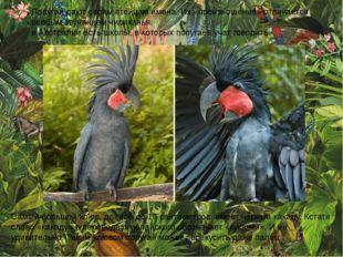 Попугаи дают своим птенцам имена. Их «произношение» отличается особым звучан