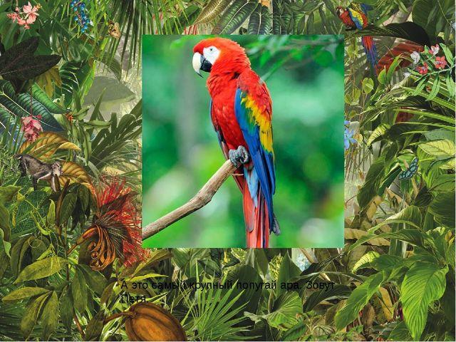 А это самый крупный попугай ара. Зовут Петя.