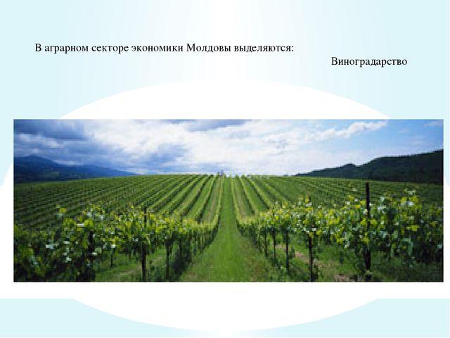 В аграрном секторе экономики Молдовы выделяются: Виноградарство