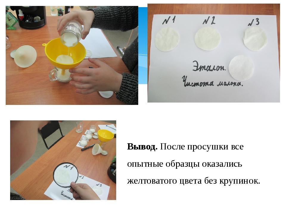 Опыт № 3. Чистота молока. Вывод. После просушки все опытные образцы оказались...