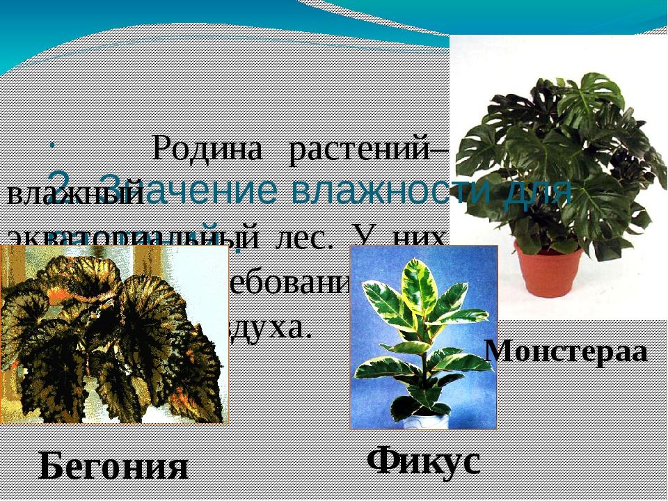 . 2. Значение влажности для растений . Родина растений– влажный экваториальны...