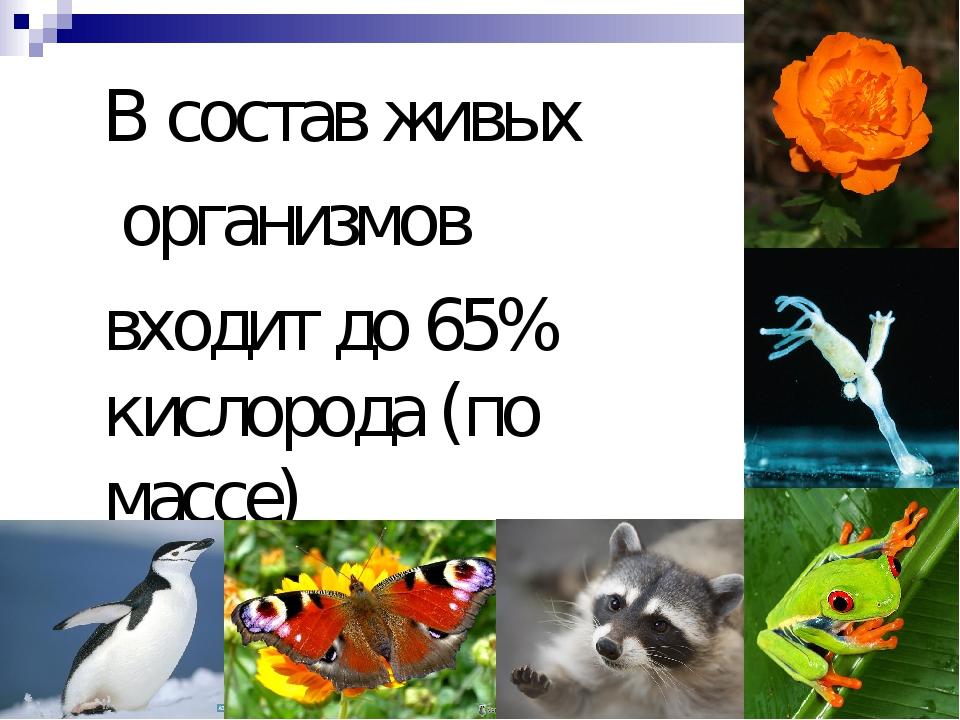 В состав живых организмов входит до 65% кислорода (по массе)