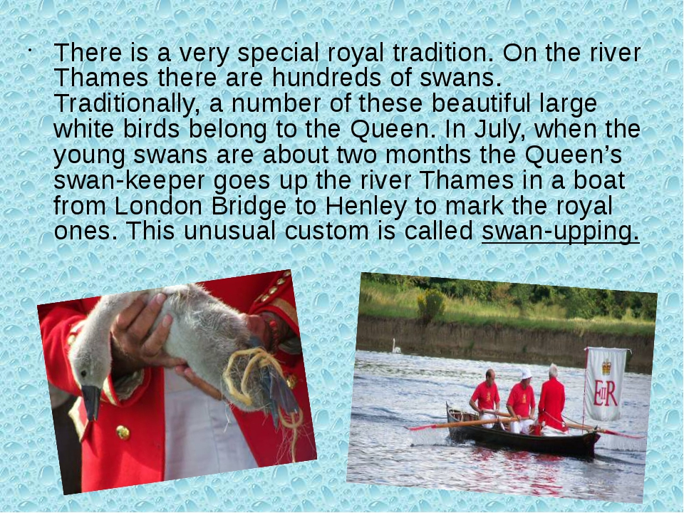 There is a very special royal tradition. On the river Thames there are hundre...