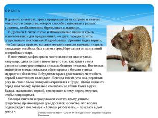 К Р Ы С А В древних культурах, крыса превращается из хитрого и алчного животн