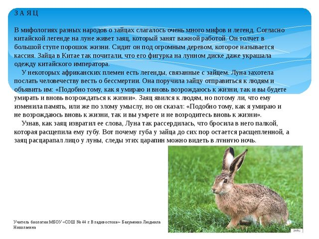 З А Я Ц В мифологиях разных народов о зайцах слагалось очень много мифов и ле...