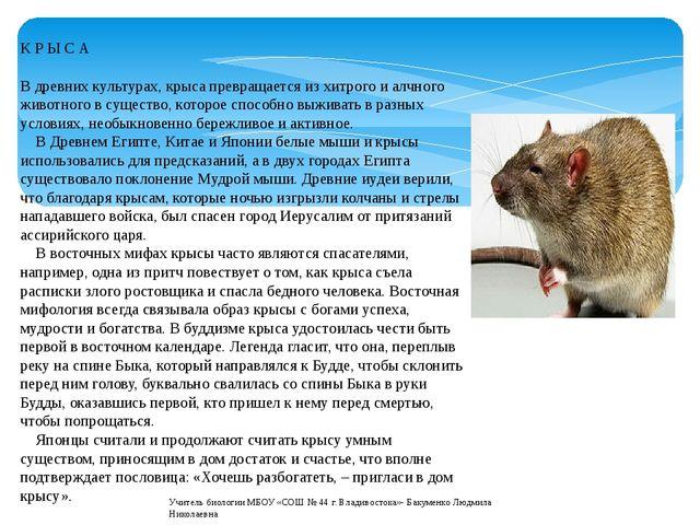 К Р Ы С А В древних культурах, крыса превращается из хитрого и алчного животн...