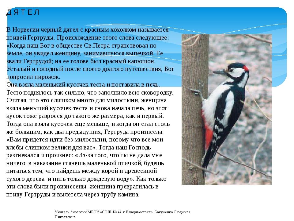 Д Я Т Е Л В Норвегии черный дятел с красным хохолком называется птицей Гертру...