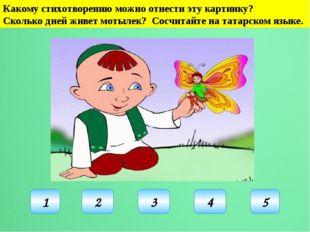 Какому стихотворению можно отнести эту картинку? Сколько дней живет мотылек?
