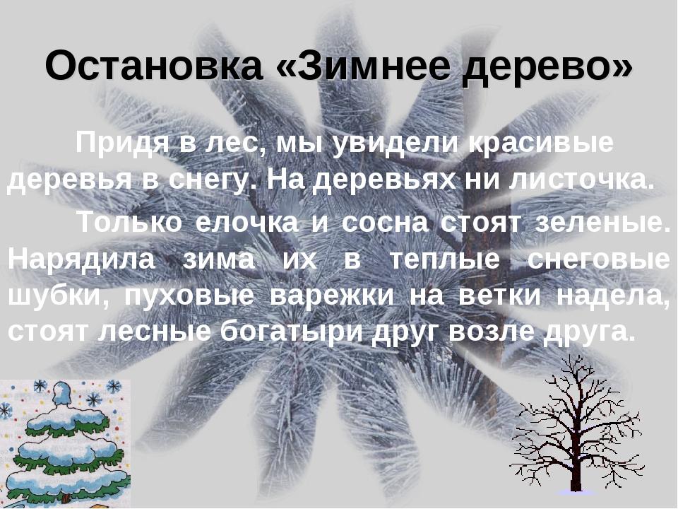 Остановка «Зимнее дерево» Придя в лес, мы увидели красивые деревья в снегу....
