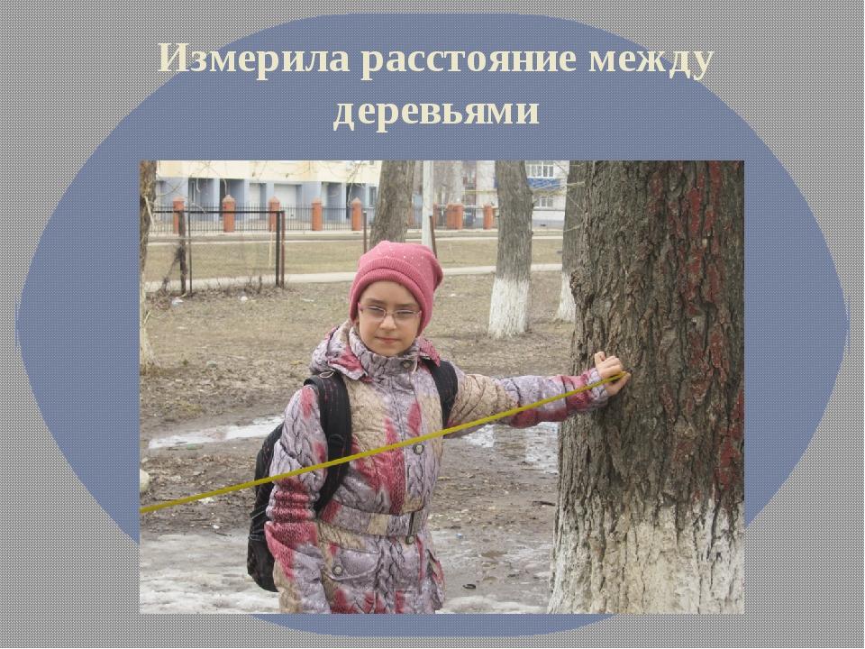 Измерила расстояние между деревьями