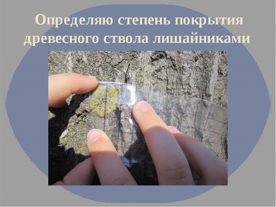 Определяю степень покрытия древесного ствола лишайниками