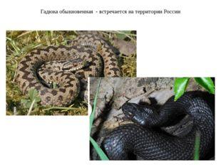 Гадюка обыкновенная - встречается на территории России