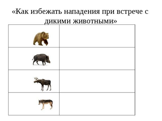 «Как избежать нападения при встрече с дикими животными»