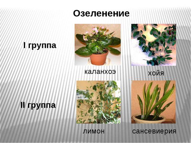 Озеленение каланхоэ лимон I группа II группа сансевиерия хойя