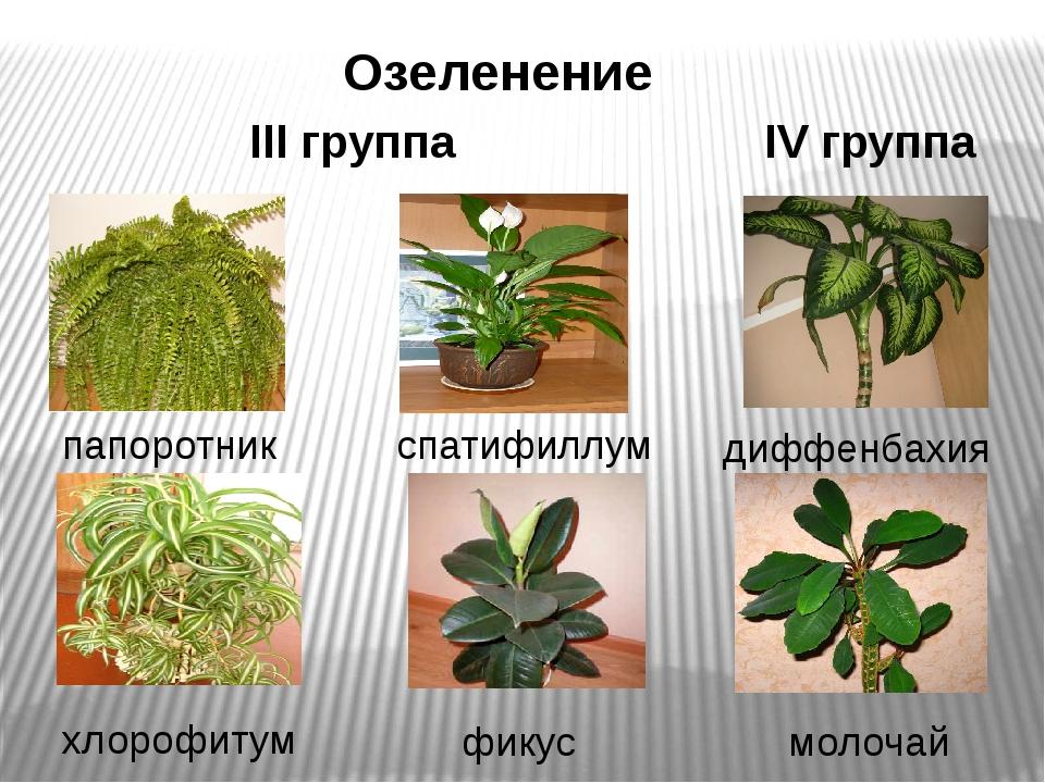 Озеленение хлорофитум III группа папоротник спатифиллум фикус IV группа диффе...