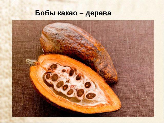 Бобы какао – дерева