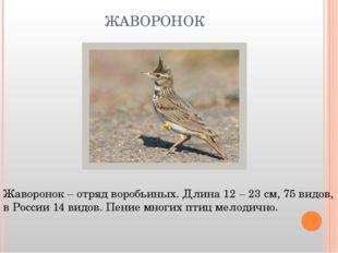 ЖАВОРОНОК Жаворонок – отряд воробьиных. Длина 12 – 23 см, 75 видов, в России