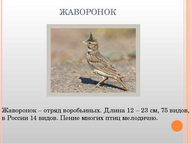 ЖАВОРОНОК Жаворонок – отряд воробьиных. Длина 12 – 23 см, 75 видов, в России...