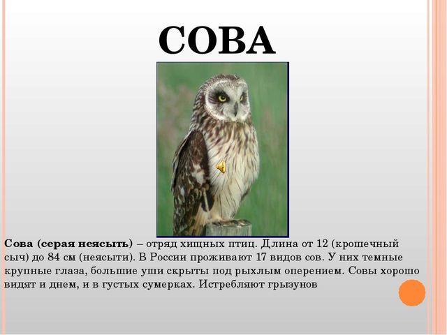 Сова (серая неясыть) – отряд хищных птиц. Длина от 12 (крошечный сыч) до 84 с...