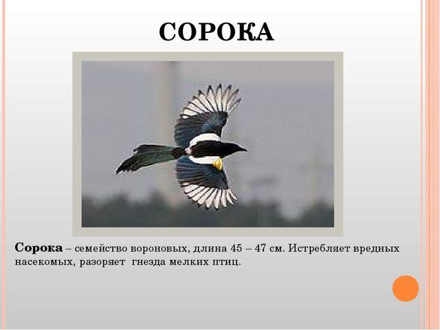 СОРОКА Сорока – семейство вороновых, длина 45 – 47 см. Истребляет вредных нас...