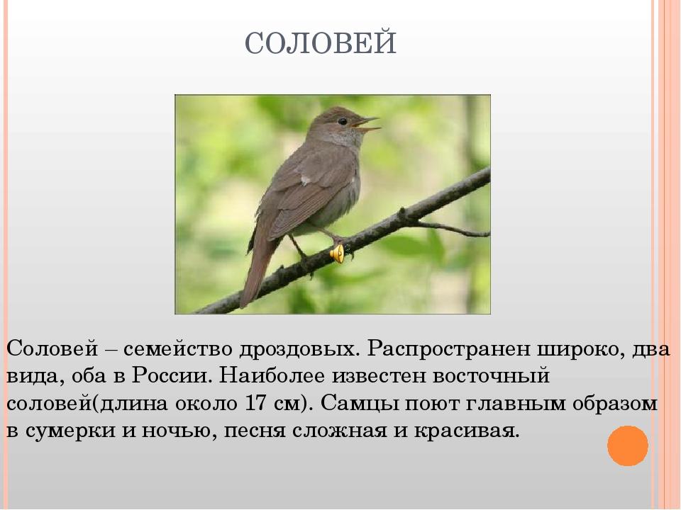 СОЛОВЕЙ Соловей – семейство дроздовых. Распространен широко, два вида, оба в...
