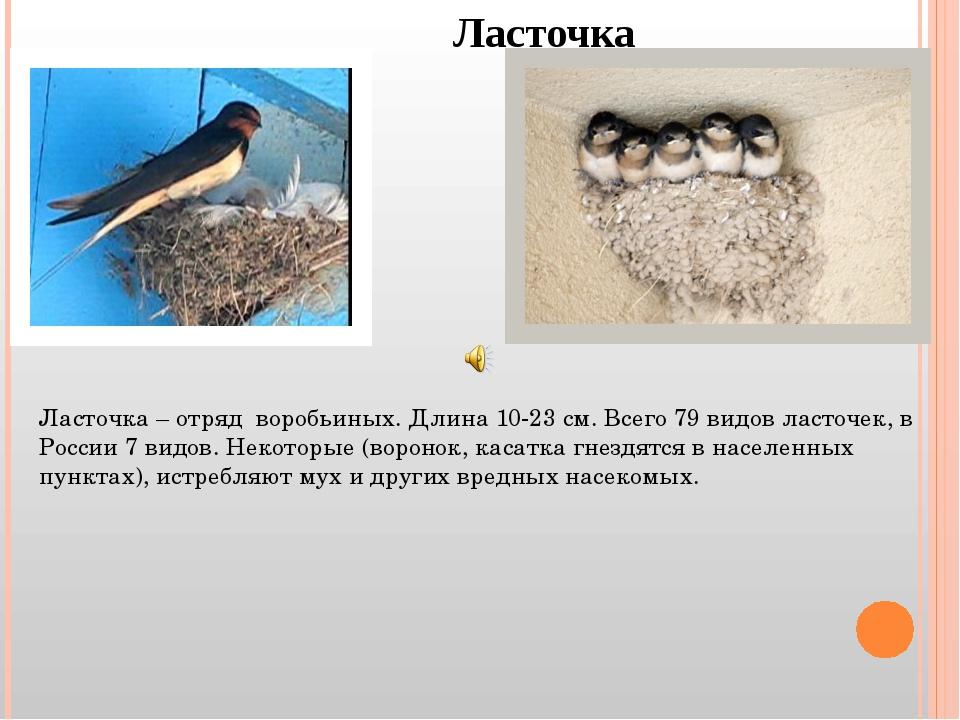 Ласточка Ласточка – отряд воробьиных. Длина 10-23 см. Всего 79 видов ласточек...