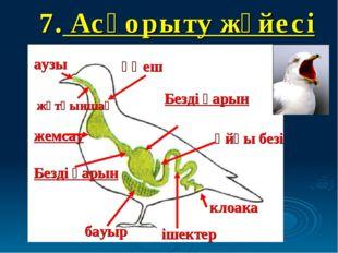 7. Асқорыту жүйесі аузы жұтқыншақ өңеш жемсау Безді қарын Безді қарын бауыр і
