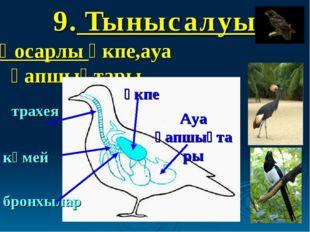 9. Тынысалуы Қосарлы өкпе,ауа қапшықтары трахея көмей бронхылар өкпе Ауа қапш