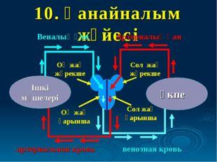 10. Қанайналым жүйесі өкпе Ішкі мүшелері Оң жақ қарынша Оң жақ жүрекше Сол жа