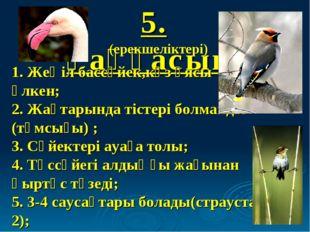 5. Қаңқасын: (ерекшеліктері) 1. Жеңіл бассүйек,көз ұясы үлкен; 2. Жақтарында