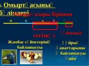 6. Омыртқасының бөлімдері сегізкөз Омыртқалары біріккен құймышақ Жамбас сүйек