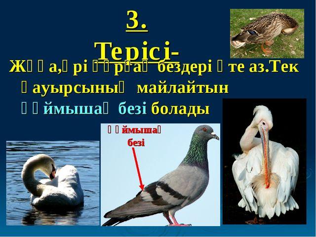 3. Терісі- Жұқа,әрі құрғақ бездері өте аз.Тек қауырсының майлайтын құймышақ б...