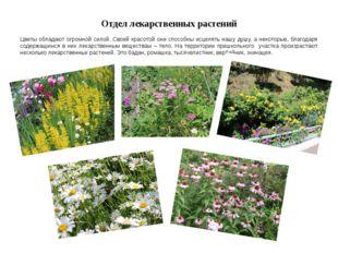 Отдел лекарственных растений Цветы обладают огромной силой. Своей красотой он