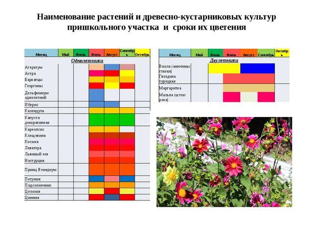 Наименование растений и древесно-кустарниковых культур пришкольного участка и...