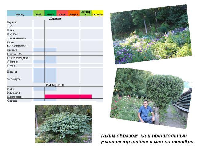 Таким образом, наш пришкольный участок «цветёт» с мая по октябрь Месяц Май Ию...