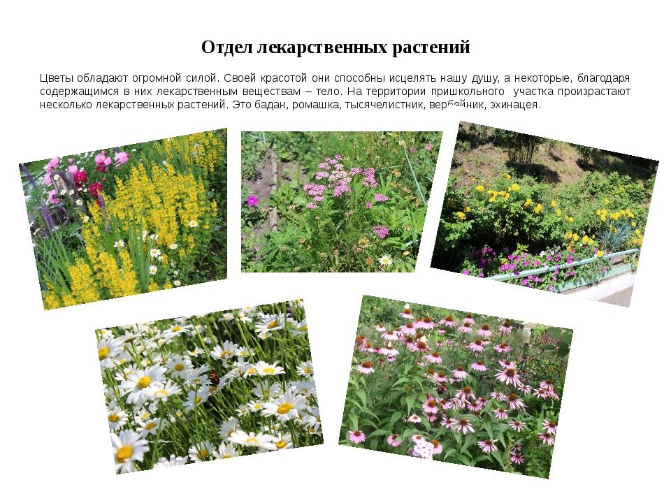 Отдел лекарственных растений Цветы обладают огромной силой. Своей красотой он...