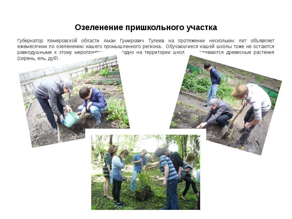 Озеленение пришкольного участка Губернатор Кемеровской области Аман Гумирович...