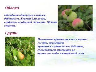 Яблоки Обладают общеукрепляющим действием. Хороши для почек, сердечно-сосудис
