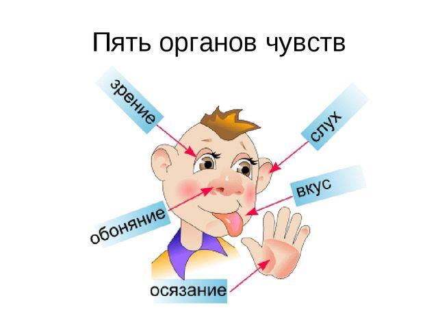 Пять органов чувств