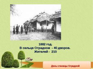День станицы Отрадной 1882 год. В сельце Отрадном - 40 дворов. Жителей - 210