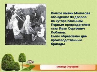 станица Отрадная Колхоз имени Молотова объединил 90 дворов на хуторе Казачьем
