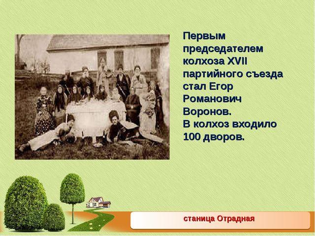 станица Отрадная Первым председателем колхоза XVII партийного съезда стал Его...