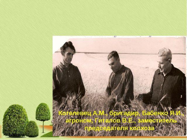 Котелевец А.М., бригадир, Бабенко Я.И., агроном, Гиталов В.Е., заместитель пр...