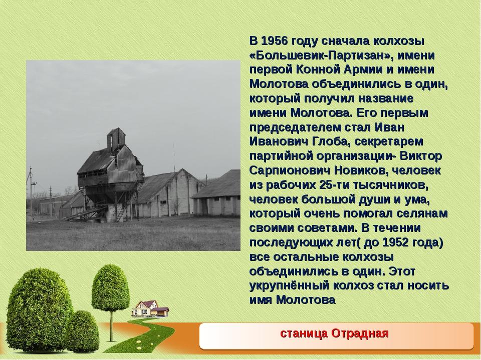 станица Отрадная В 1956 году сначала колхозы «Большевик-Партизан», имени перв...