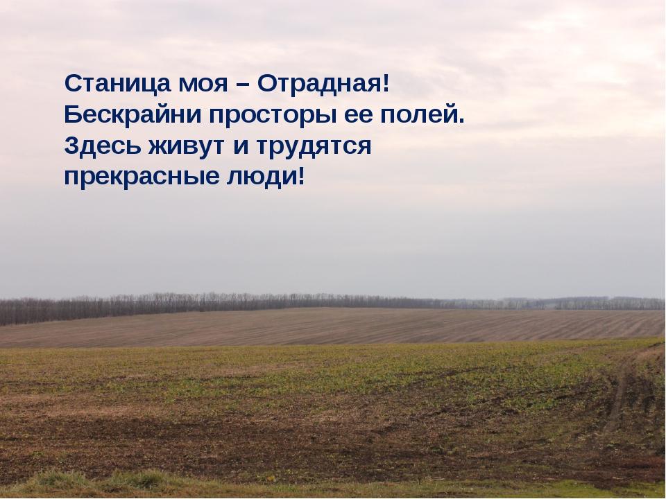 Станица моя – Отрадная! Бескрайни просторы ее полей. Здесь живут и трудятся...