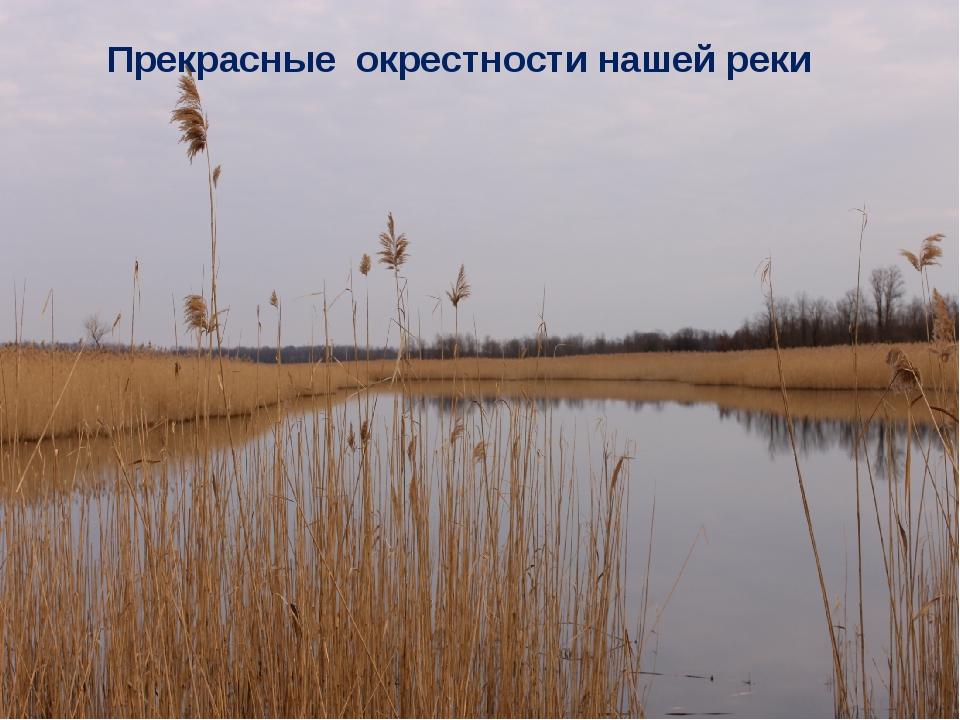 Прекрасные окрестности нашей реки
