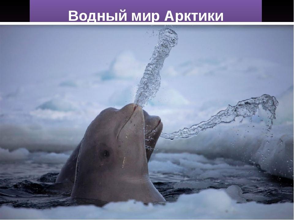 Водный мир Арктики