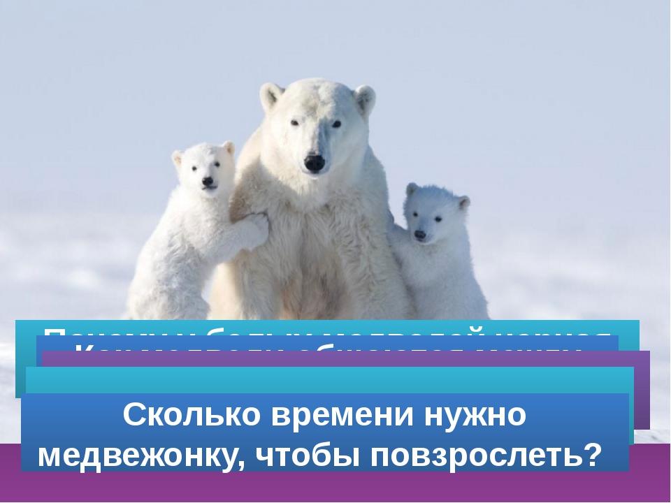 Почему у белых медведей черная кожа? Как медведи общаются между собой? Скольк...